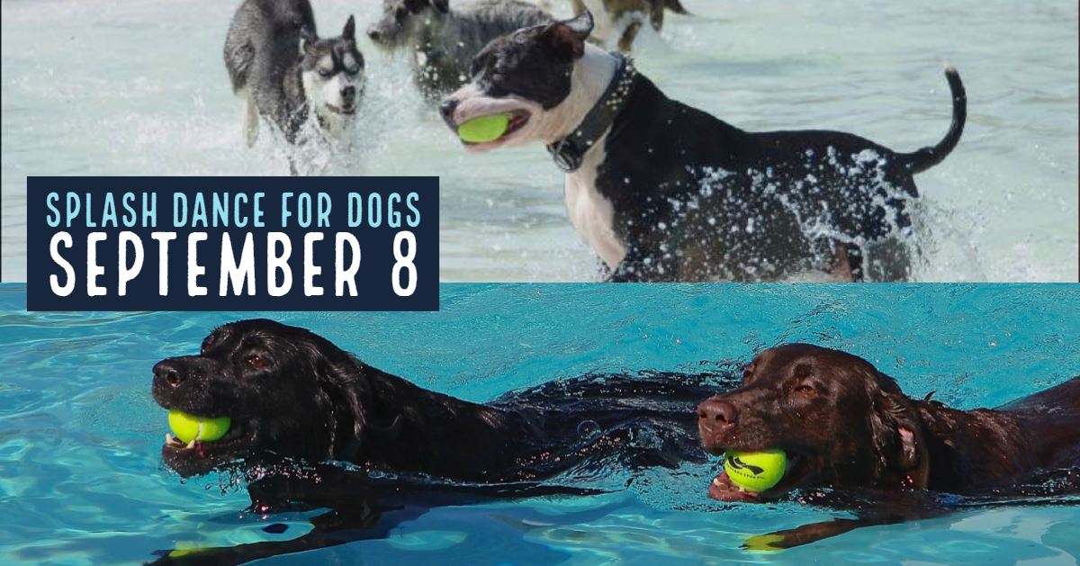 AnimalSplashDanceforDogs2018