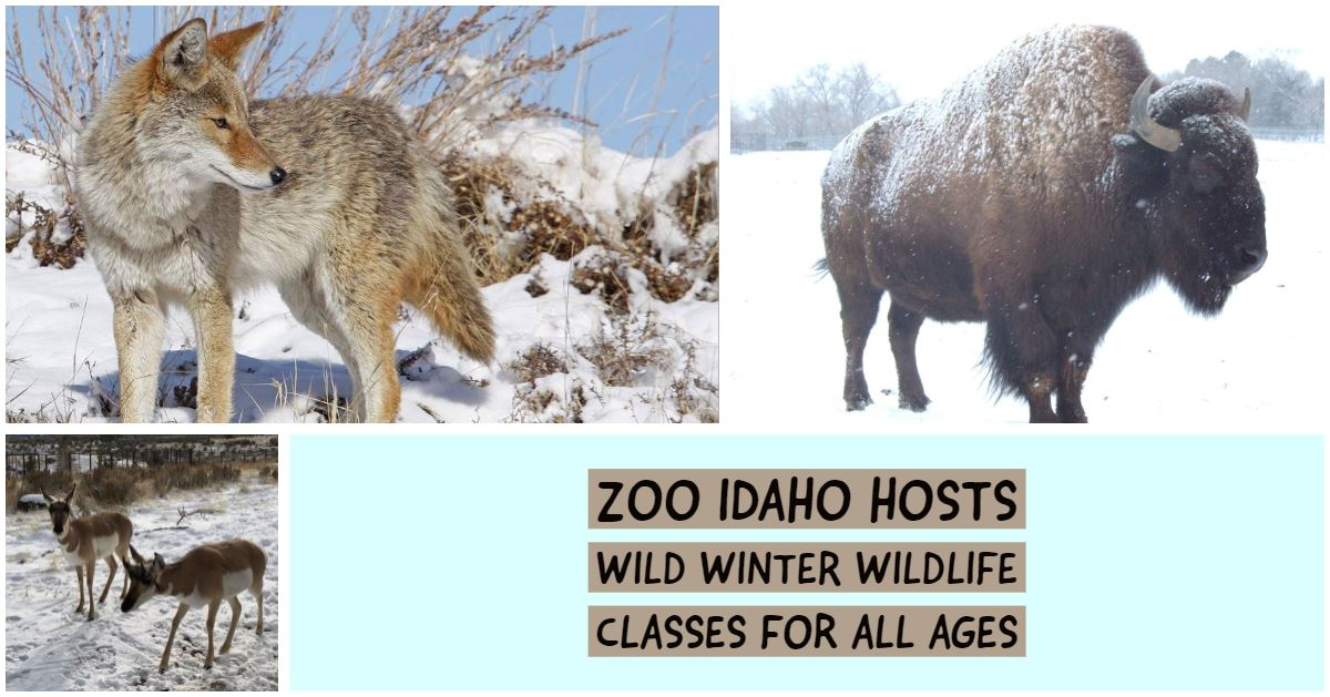 How the animals of the Intermountain West survive the winter months will be the topic of a new serie