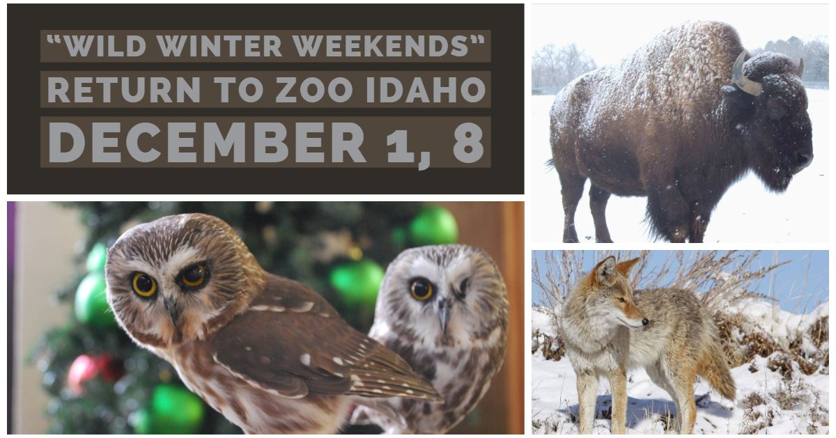 Saturday, December 1 and Saturday, December 8, from 1 p.m. to 5 p.m. both days, the zoo will host it
