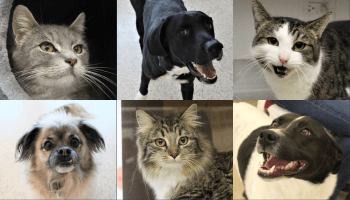 Adoptable dogs and cats at the Pocatello Animal Shelter.